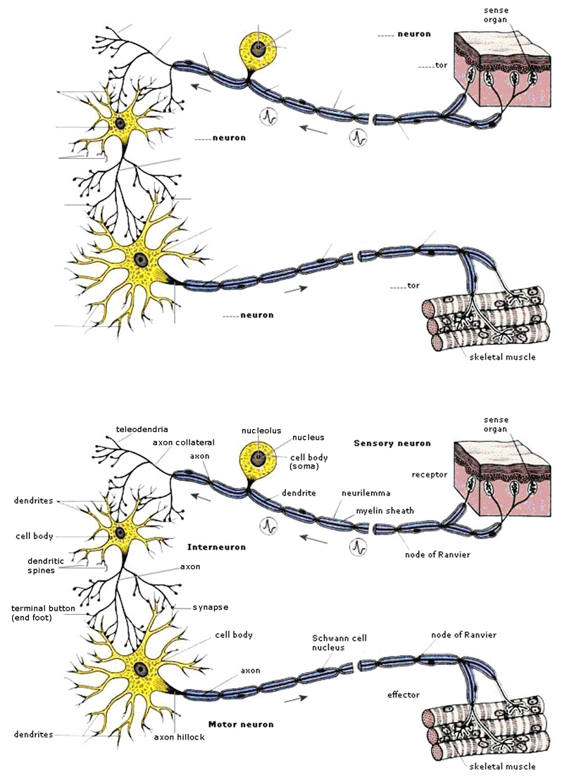 Neuron Image 100